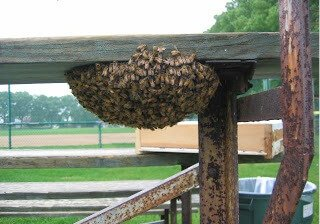 Is your grandstand a host to bees, wasps and yellow jackets?